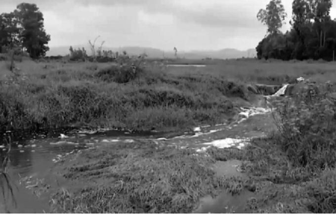 Nhà máy đường Tuy Hòa xả thảira môi trường, ảnh hưởng đến đời sống người dân.